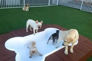 Backyard Music System Luxury Dog Boarding Las Vegas Nv Luxe Pet Hotels