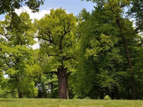 trees images 10 of europe s most remarkable trees treehugger