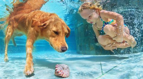 golden retriever exercise needs health products for pets exercise with your dogs