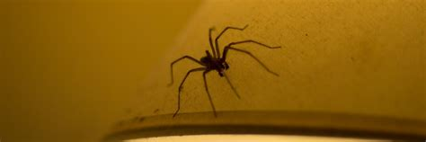 how to stop a from indoors use stopgap to stop spiders coming inside this autumn