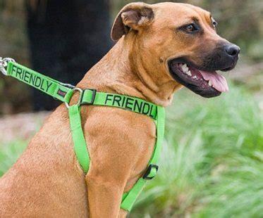 friendliest dogs friendly leash