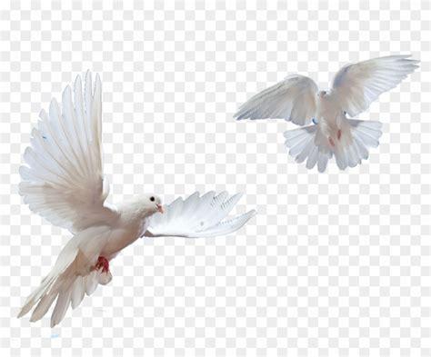 flying doves png transparent png