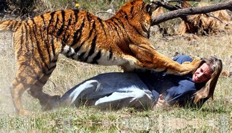 imagenes impresionantes de ataques de animales ig colunistas o buteco da net o buteco da net 187 dubl 234