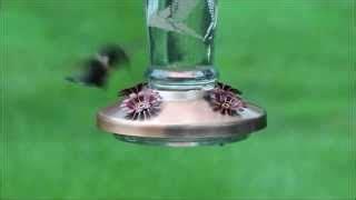 solar lighted hummingbird feeder solar bird feeders woodworking projects plans