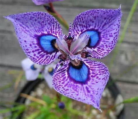 fiore tropicale 17 migliori idee su fiori tropicali su fiori