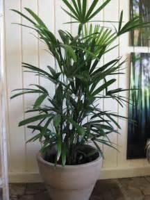 Inside Plants Indoor Plants The Jungle In Willunga Fern Forest Nursery