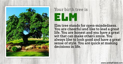 elm tree symbolism elm tree symbolism beatiful tree