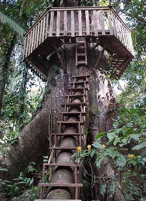 treehouse house file treehouse access and roundwalk jpg wikimedia commons
