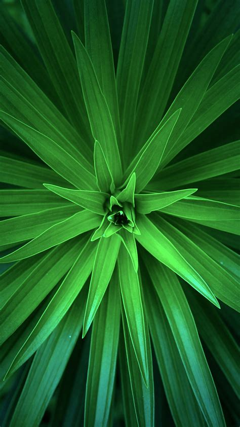 papersco iphone wallpaper nh leaf flower green