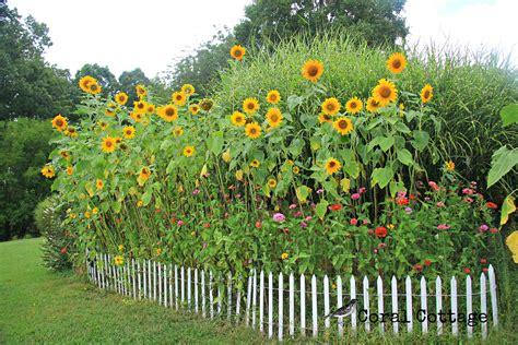 Red Dirt Farm Sun Flower Garden