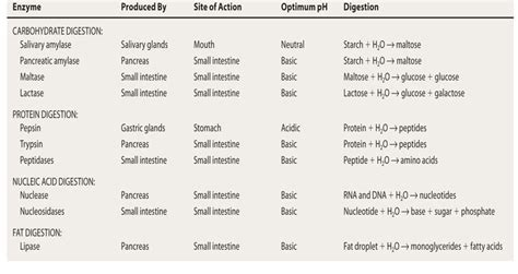 digestive enzymes and their functions table topic 6 1 digestion and absorption amazing of