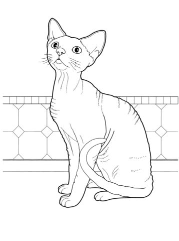 sphynx cat coloring page devon rex coloring page free printable coloring pages