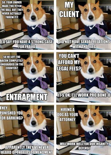 Corgi Lawyer Meme - lawyers corgis and dogs on pinterest