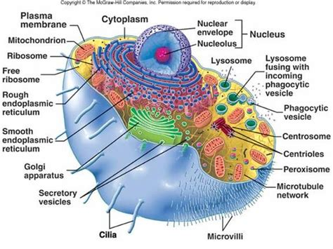 lecture   cellular biology science cell theory