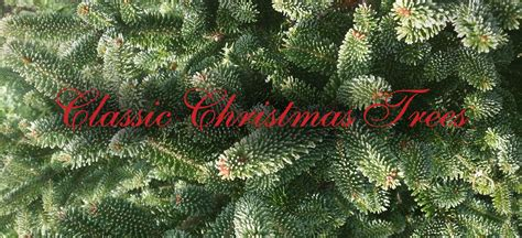christmas trees for sale cheap real christmas trees for