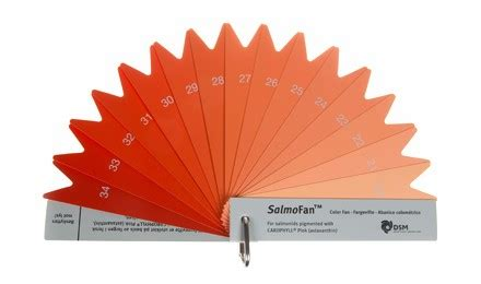 cooked salmon color salmon dsm color fans solutions products dsm