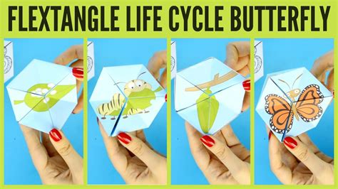 How To Make Paper Cycle - butterfly cycle paper template flextangle
