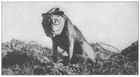 Sergeant Stubby In Ww1 Sergeant Stubby Will Change The Way You Look At Your