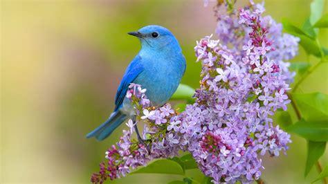wallpaper blue picture ke farklı t 252 rde g 252 zel kuşların hd resimleri rooteto