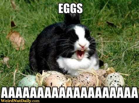 Cute Easter Meme - funny pictures weirdnutdaily crazy bunny