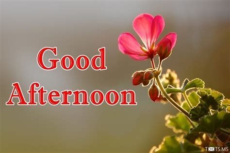Good Afternoon SMS, Wishes, Quotes, Images for Facebook