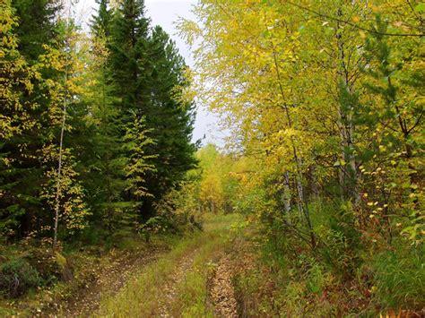 alberi e fiori pianeta gratis wallpaper e sfondi alberi e fiori alberi