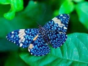 mariposas pics image gallery imagenes de una mariposa