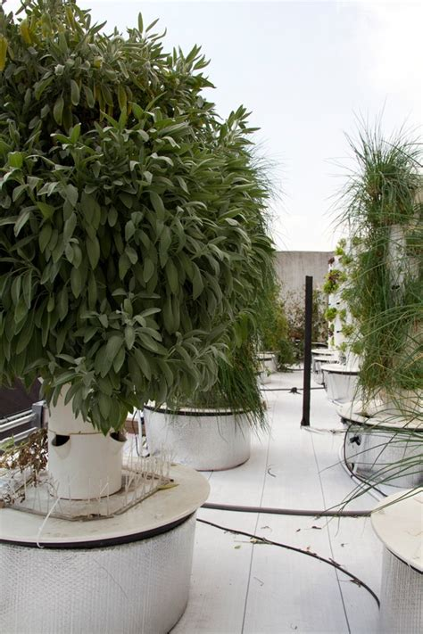 Bell Book And Candle Restaurant Rooftop Garden by Manhattan Rooftop Aeroponic Farm Yields Fresh Produce For