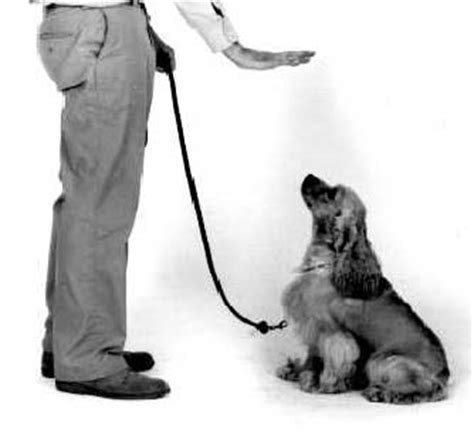 how to your to sit stay and come complete guide to tucson obedience