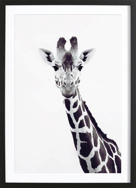 giraffe als poster im holzrahmen von monika strigel juniqe