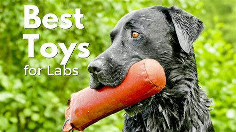 best chew toys for lab puppies best toys for labs toys model ideas