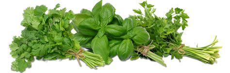 indoor herb garden ideas baking naturally