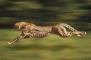How Fast Does A Jaguar Run Fastest Animal In The World Remote