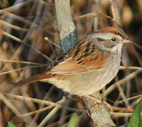 Lookups Are Made Possible By This Domain File Sw Sparrow Jpg