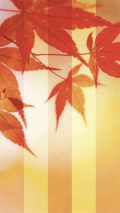 wallpaper daun gugur daun musim gugur gugur wallpaper sc iphone6s