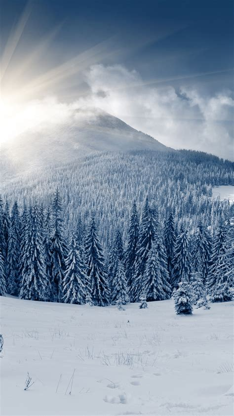 wallpaper winter forest   wallpaper mountain sun