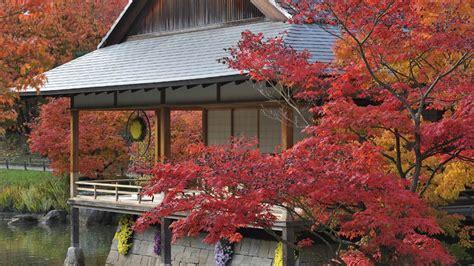 japanischer ahorn im zen garten
