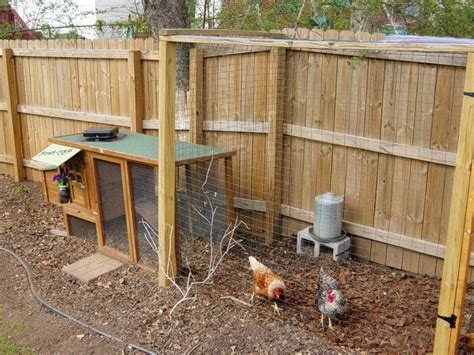 small backyard chicken coops