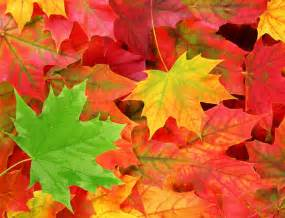 colored leaves quotes quotesgram