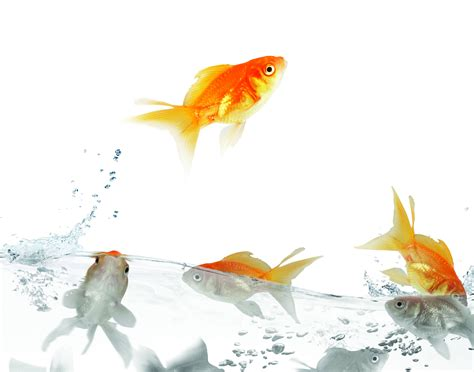 3d wallpaper water fish wallpaper fish traffic water white background hd