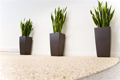 Plants For The Office | office plants on pinterest office plants interior