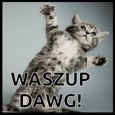 Wassup Meme - wassup meme wave maze the casino images netthe casino