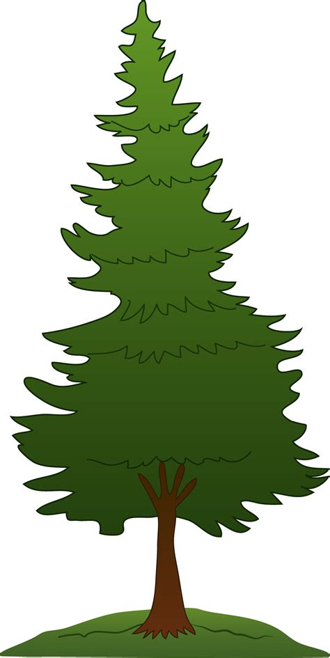 tree clipart coniferous trees clipart clipart best