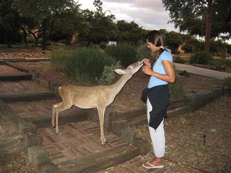 what can i feed deer in my backyard 301 moved permanently