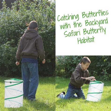 backyard safari butterfly habitat backyard safari butterfly habitat by alex brands
