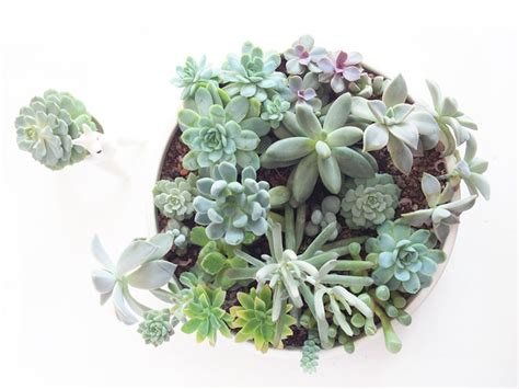 grow choosing succulents that go together hello harriet