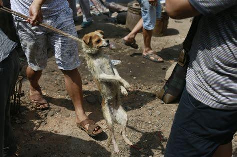 yulin festival yulin festival provokes global fury 183 a humane nation