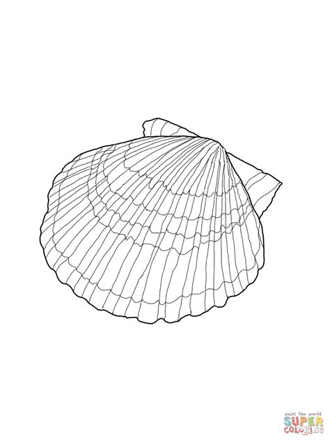 shell coloring pages scallop shell coloring page free printable coloring pages