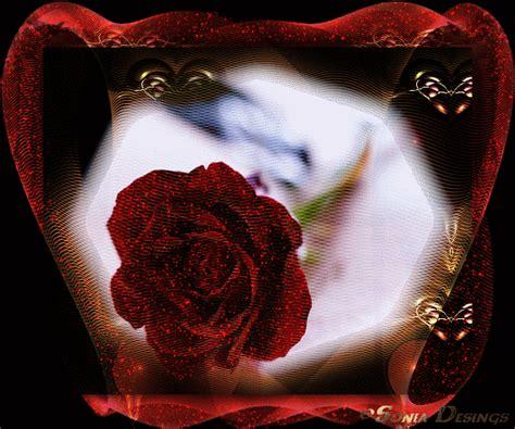 imagenes rosas con movimiento y brillo imagenes de rosas de amor con brillo y con mobimientos
