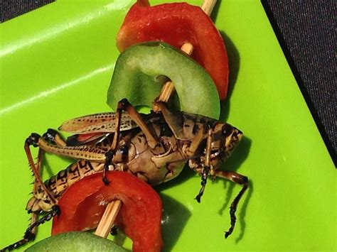 Would You Eat This Grasshopper Snack by Eat Like The Boxtrolls At San Diego Comic Con With Chef